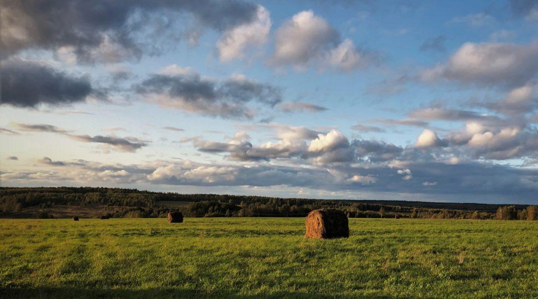Патентное налогообложение животноводства и растениеводства